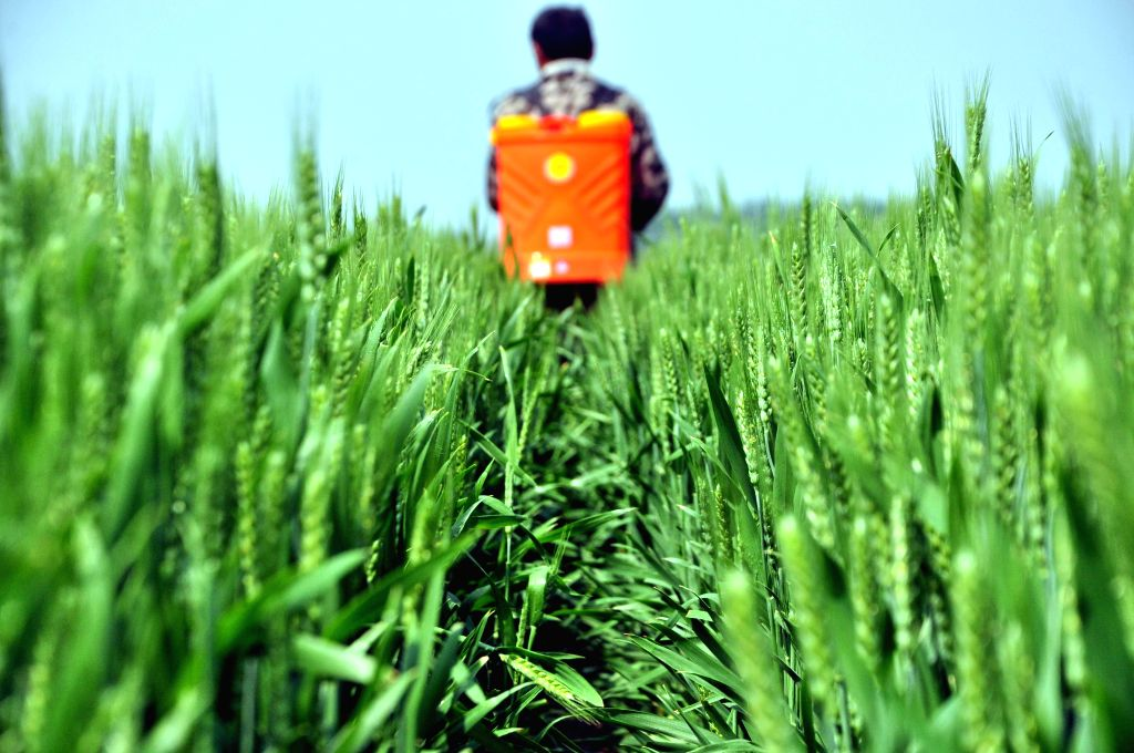 A farmer sprays pesticide in the wheat fields in Jiazhai Township of Liaocheng City, east China's Shandong Province, April 28, 2014.