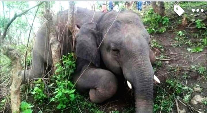Lightning kills herd of 18 wild elephants in Assam.