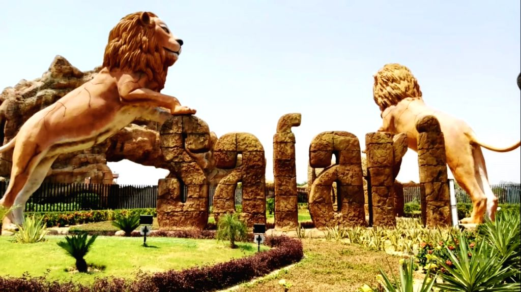 Lion, lioness isolated in Etawah Lion Safari.