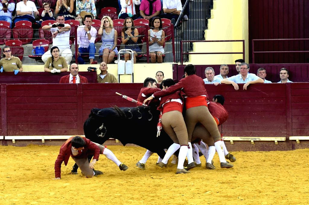 Matadors during a traditional Portuguese bullfight at Lisbon's Campo Pequeno bullring, Portugal, Aug. 7, 2014. Portuguese bullfighting is different and far less gory .