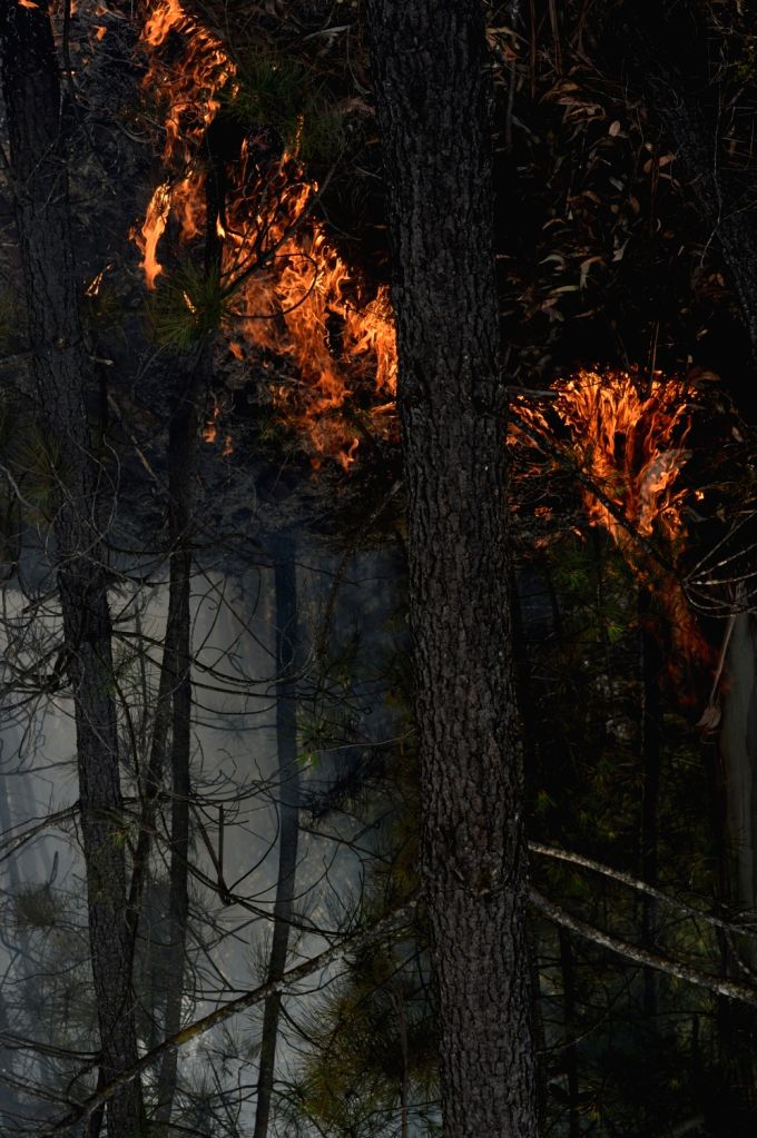 LISBON, June 18, 2017 - Fire blazes in the forest in the area of Pedrogao Grande, central Portugal on June 18, 2017. The number of people killed in the forest fire raging in central Portugal has ...