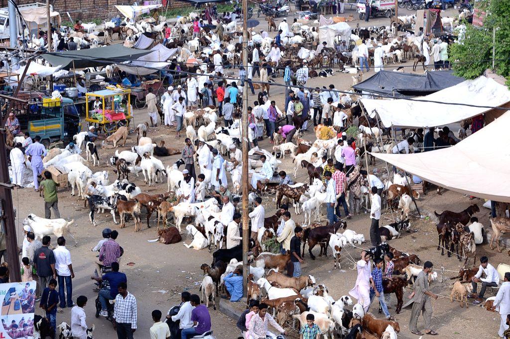 Livestock traders assemble at a makeshift market ahead of Eid al-Adha in Jodhpur, on Sept 9, 2016.