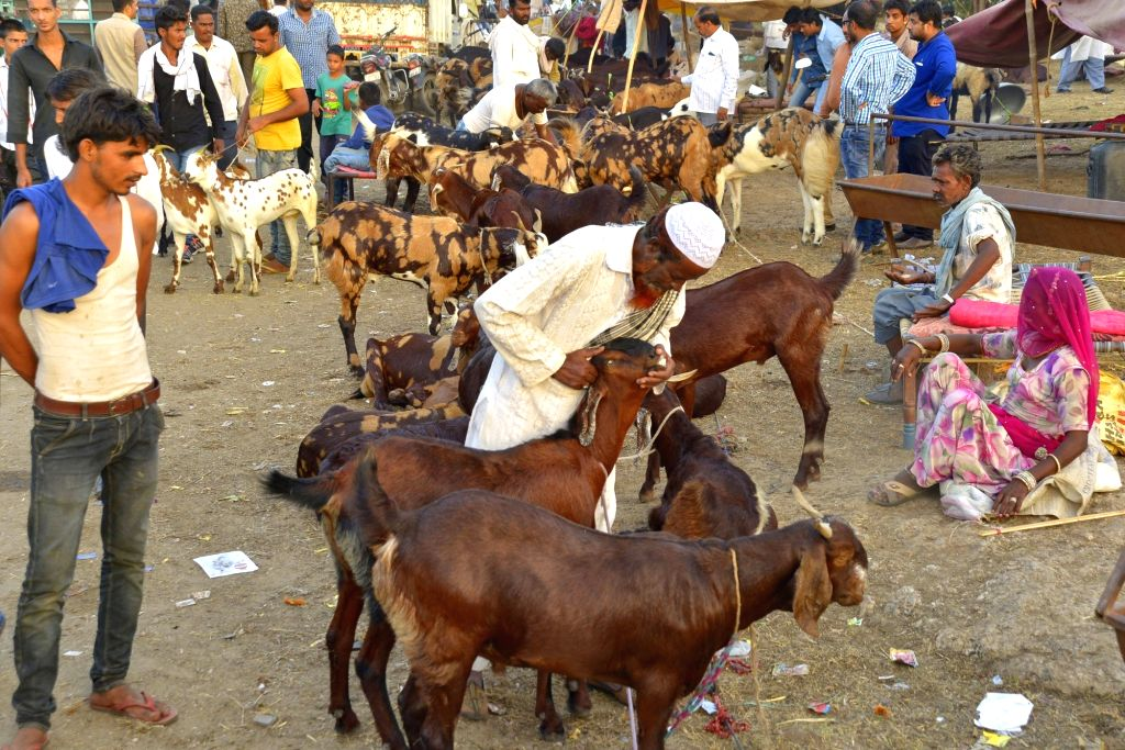 Livestock traders assemble at a makeshift market ahead of Eid al-Adha in Ajmer on Sept 10, 2016.