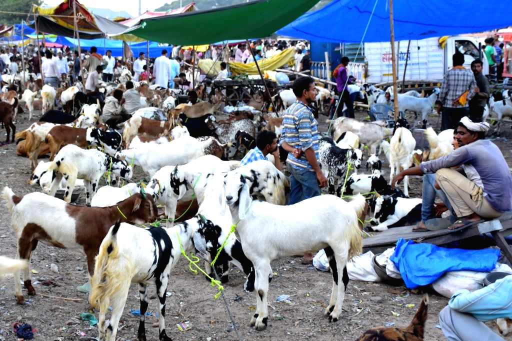 Livestock traders assemble at a makeshift market ahead of Eid al-Adha in Jaipur, on Sept 10, 2016.