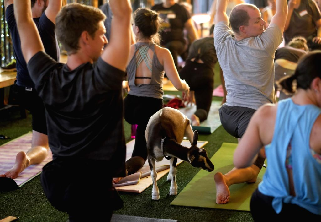"""LOS ANGELES, July 17, 2018 - A baby goat stands on the back of a yoga participant during a """"goat yoga class"""" in Los Angeles, the United States, July 16, 2018."""