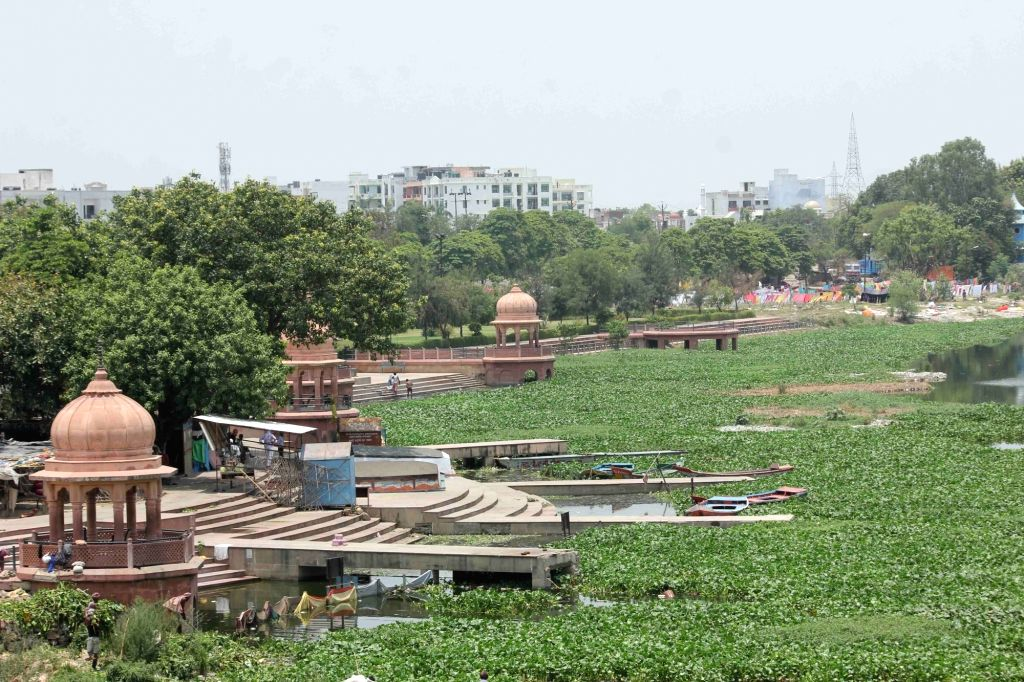 Lucknow: A view of the Gomti river covered with the carpet of water hyacinth, in Lucknow on June 26, 2019. A survey carried out by a team of environmentalists has found that the dissolved oxygen (DO) in the Gomti river has dipped to dangerous levels