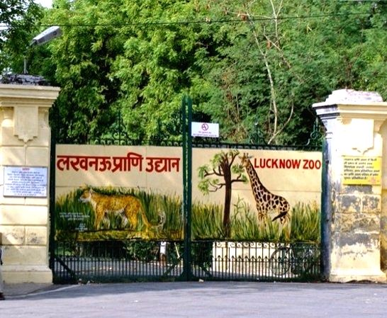 Lucknow zoo.
