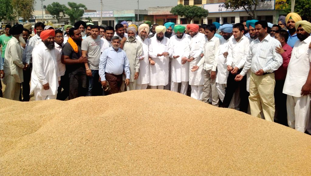 Punjab Congress Chief Partap Singh Bajwa during his visit to a Ludhiana grain market on April 25, 2015.