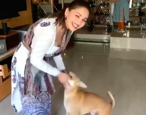 Madhuri, Preity shower love on furry friends on National Pet Day.