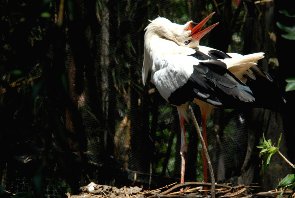 MALANG, Nov. 29, 2019 - A white stork is seen at a park in Malang, East Java, Indonesia, Nov. 29, 2019.