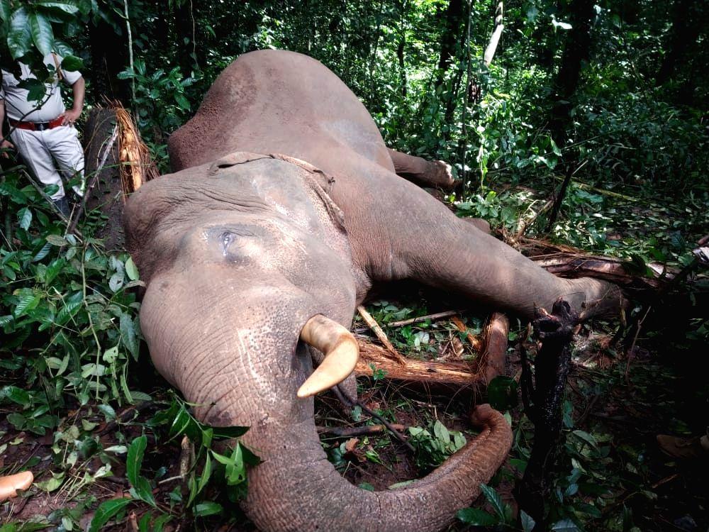 Male elephant electrocuted in Karnataka's Dakshina Kannada.