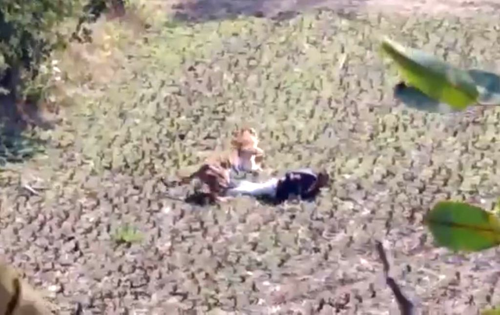 Man escapes himself from the Tiger's paw, Netizens praise