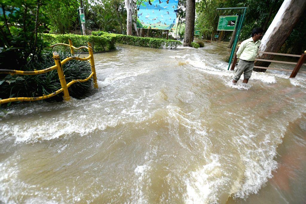Mandya: A view of flooded Ranganathittu bird sanctuary following heavy release of water from the Krishnaraja Sagar (KSR) dam after heavy rains near Srirangapatna of Mandya district, Karnataka on Aug 11, 2019. (Photo: IANS)