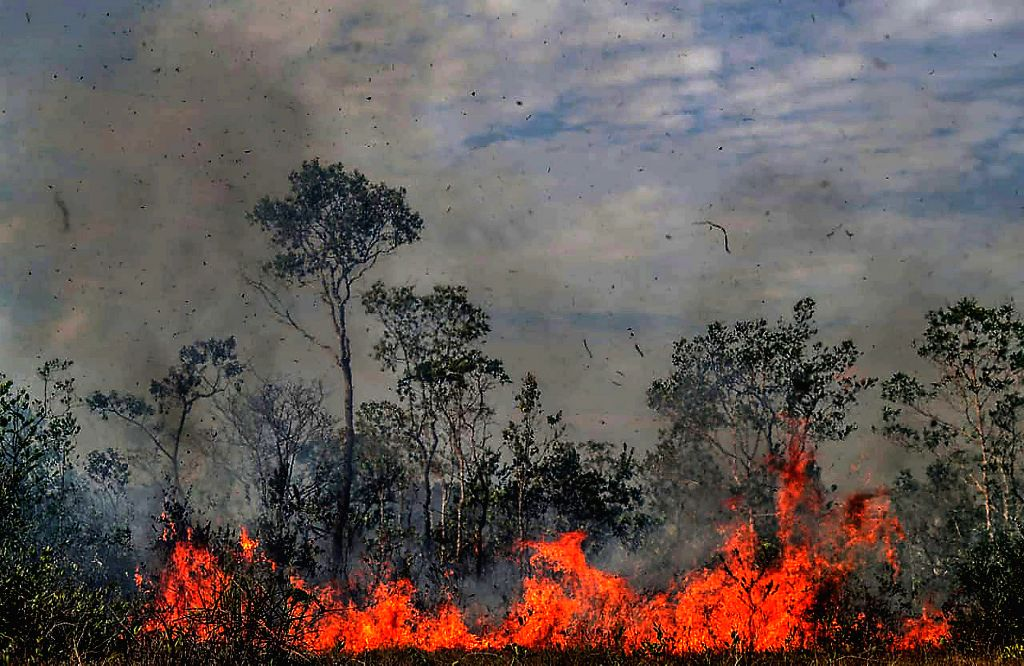 MANICORE, Aug. 28, 2019 - Photo taken on Aug. 26, 2019 shows a fire consuming trees in Manicore, the state of Amazonas, Brazil. BRAZIL OUT