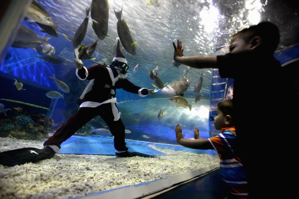 A diver dressed as a Santa Claus feeds marine animals inside an oceanarium in Manila, the Philippines, Dec. 2, 2014. The Christmas-themed feeding activity served as a celebration of the ...