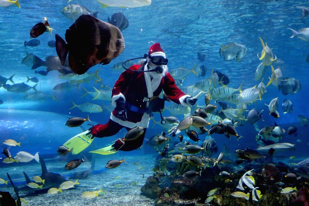 MANILA, Dec. 14, 2018 - A diver dressed in a Santa Claus costume feeds fish at the Manila Ocean Park in Manila, the Philippines, Dec. 13, 2018. The Christmas-themed activity served as a celebration ...