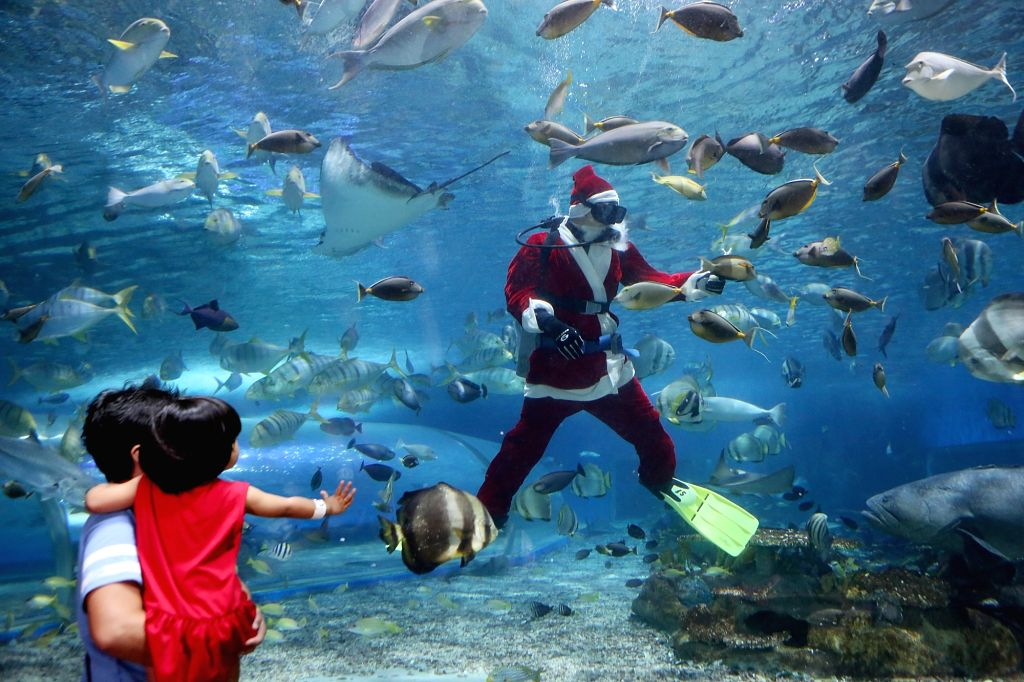 MANILA, Dec. 14, 2018 - Visitors look at a diver dressed in a Santa Claus costume at the Manila Ocean Park in Manila, the Philippines, Dec. 13, 2018. The Christmas-themed activity served as a ...