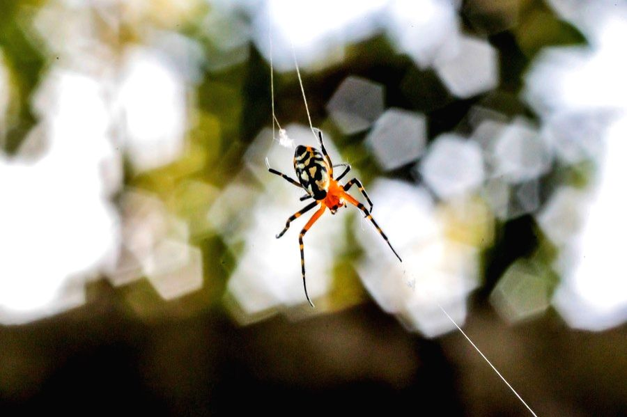 Manila, Dec. 30 A spider is seen at a park in Manila, the Philippines, Dec. 29, 2020.