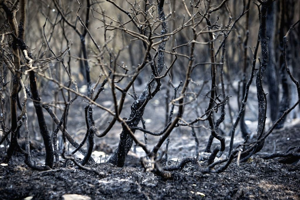 MARIVAN (IRAN), Sept. 4, 2018 Burnt trees are seen outside Marivan city, western Iran, on Sept. 3, 2018. Four people were killed in the forest wildfire near Marivan recently.