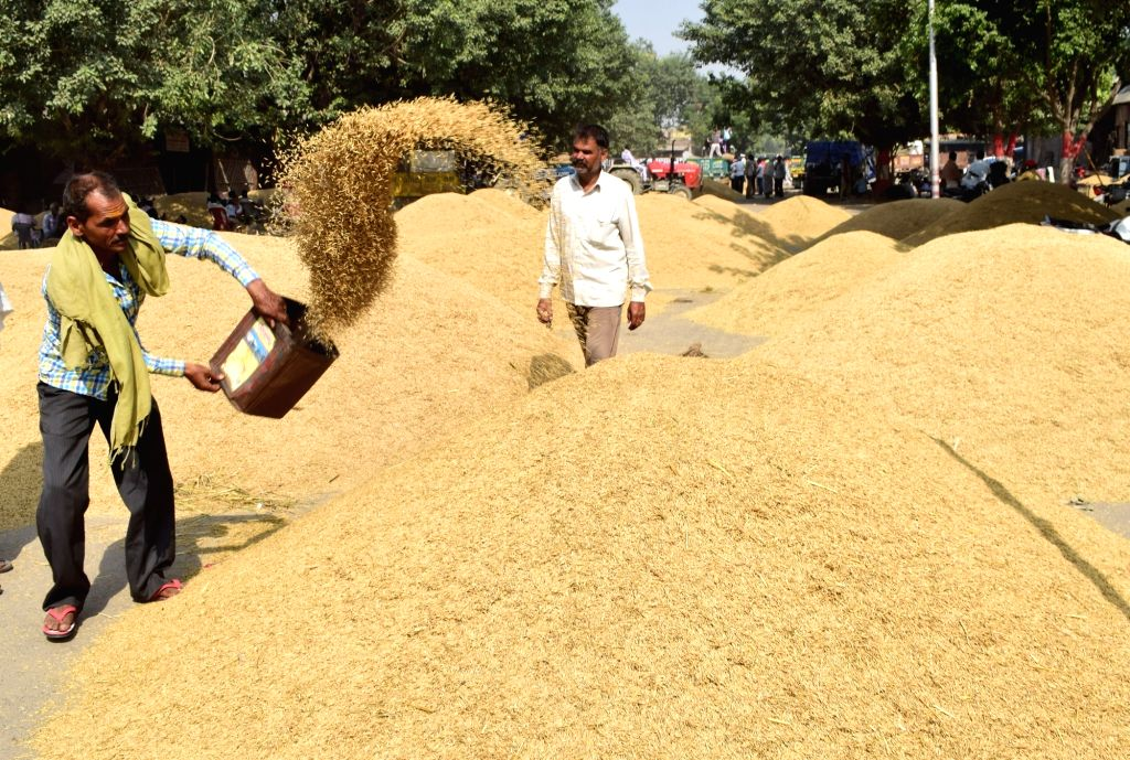 : Mathura: Heaps of paddy at Anaj Mandi in Mathura on Oct 20, 2018. (Photo: IANS).