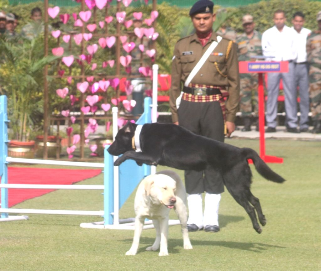 Meerut to have war memorial for animals. (Photo: IANS)