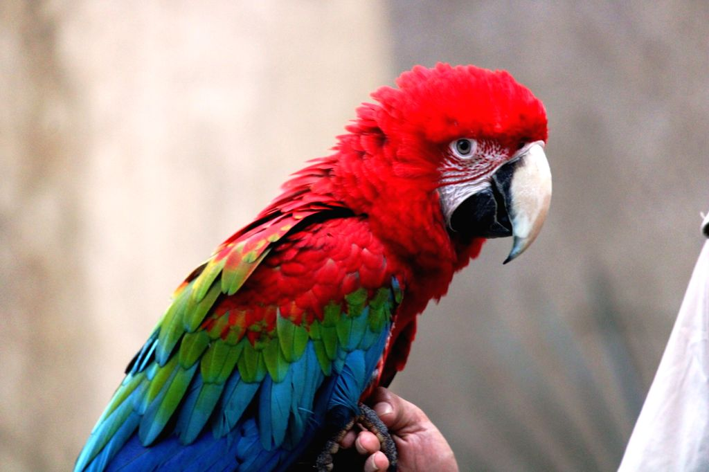 Meet exotic birds in live session series.