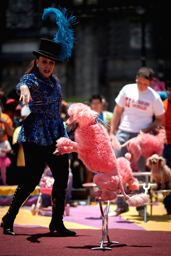 An artist and her dog participates in a circus show that takes place as part of a pacific protest in favor of the use of animals in this kind of shows, at ...
