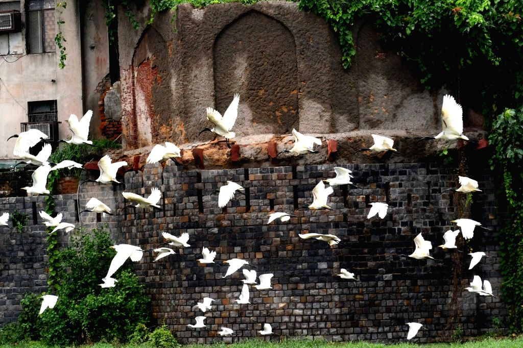 Migratory birds seen flapping their wings in Old Delhi on Sep 1, 2020.