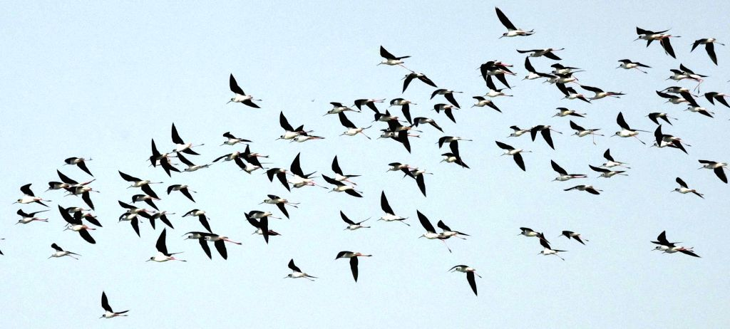 Migratory birds seen flying over the Ganga river in Patna, on Feb 7, 2019.