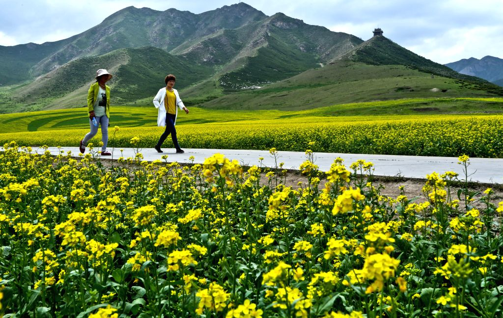 MINLE, July 6, 2016 - Tourists view rapeseed flowers in Minle, northwest China's Gansu Province, July 6, 2016. Rapeseed flowers are in full bloom in Minle recently.