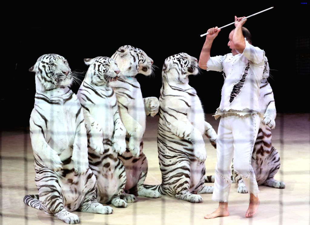 MINSK, Sept. 20, 2019 - A trainer performs with tigers on the 2nd Minsk International Circus Arts Festival in Minsk, Belarus, Sept. 19, 2019.