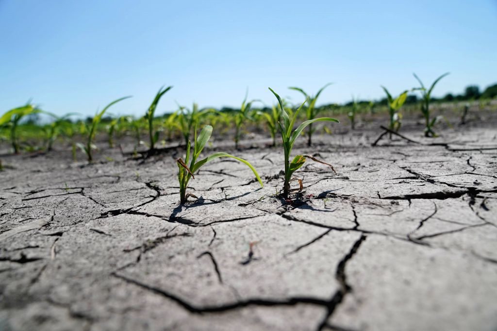 MISSOURI, June 13, 2019 - Photo taken on June 10, 2019 shows Blake Hurst's sun-dried fields after being soaked in rain in Tarkio, Missouri, the United States. TO GO WITH Feature: Midwest farmers ...
