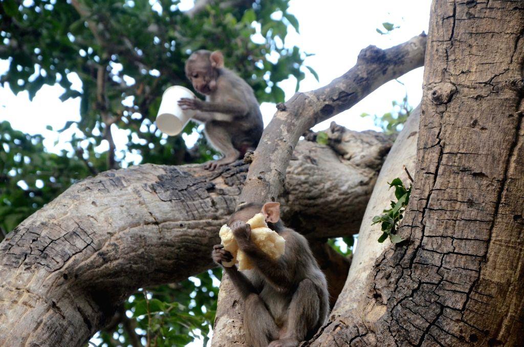 Monkeys at Elephanta Caves in Mumbai, on Jan 29, 2019.