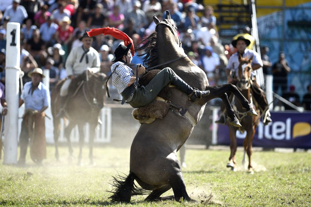 A man rides a horse during the tamings, in the 90th Del Prado Creole Week, in Montevideo, capital of Uruguay, on March 29, 2015. According to local press, ...