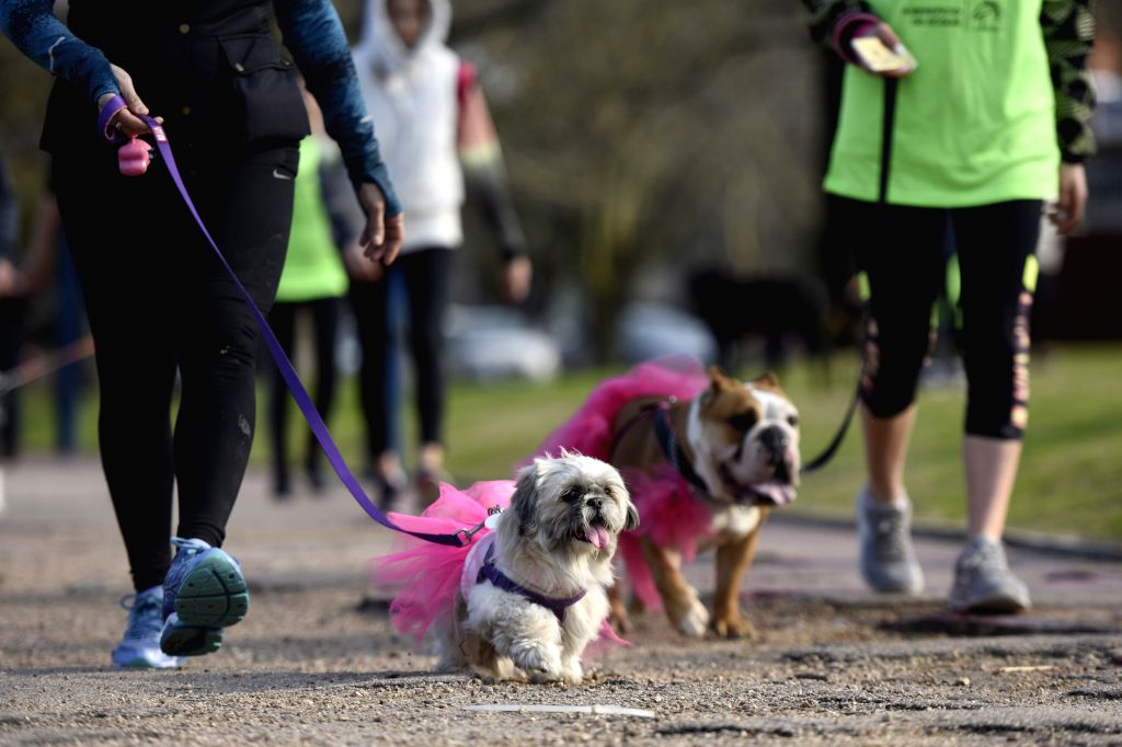 """MONTEVIDEO, Sept. 9, 2018 - Owners and their dogs take part in the race """"Pet Run"""" in Montevideo, capital of Uruguay, on Sept. 8, 2018."""