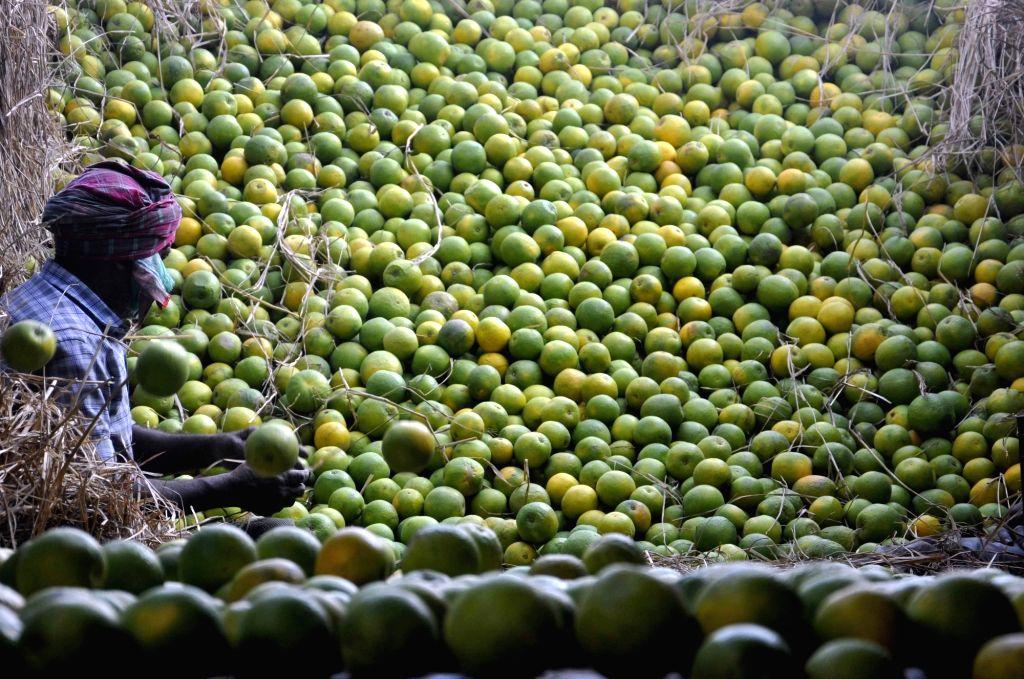 Mosambi or sweet lime at a fruit market of Kolkata on May 7, 2017.