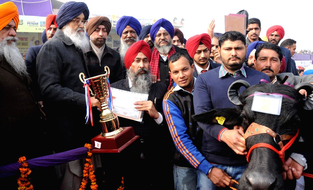 Punjab Deputy Chief Minister Sukhbir Singh Badal addresses during the National Livestock Championship and Livestock Expo-2015 in Muktsar, Punjab on Jan 12, 2015. - Sukhbir Singh Badal