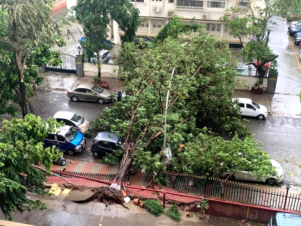 Mumbai: A tree gets uprooted at Mumbai's Cuffe Parade during rains triggered by the effect of Cyclone Nisarga which made a landfall near Harihareshwar in adjoining Raigad district of Maharashtra on June 3, 2020. (Photo: IANS)