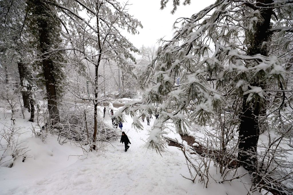 MURREE, Feb. 8, 2019 - A tourist walks in snow in Murree, some 60 kilometers north of Islamabad, capital of Pakistan,  on Feb. 7, 2019. The recent snowfall in Murree and nearby areas has attracted a ...