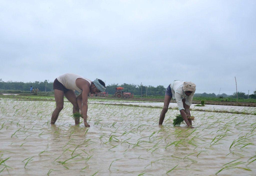 Muzaffarpur: Farmers busy planting paddy saplings at a field during monsoons, in Muzaffarpur district of Bihar on July 9, 2019. (Photo: IANS)
