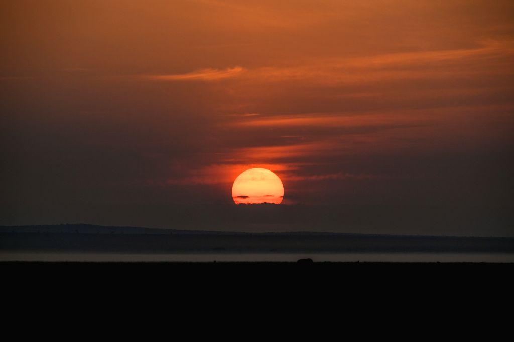 NAIROBI, June 17, 2019 - A gnu searches for food at sunrise in Amboseli National Park, Kenya, June 16, 2019.