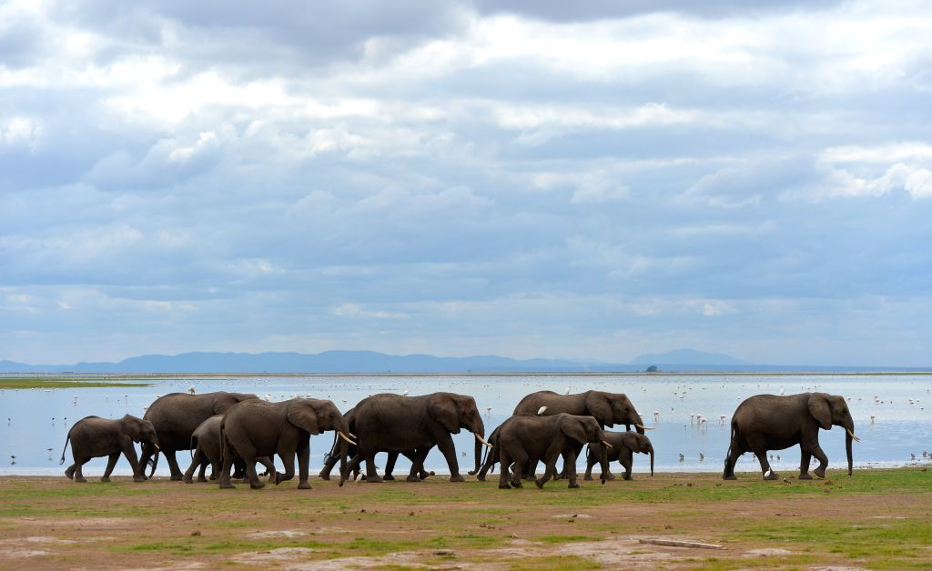 NAIROBI, June 17, 2019 - Elephants walk by a lake in Amboseli National Park, Kenya, June 15, 2019.