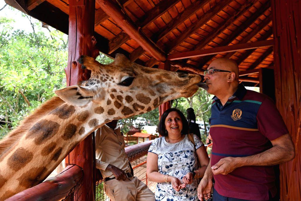 NAIROBI, June 5, 2017 - A visitor feeds a giraffe in Nairobi's giraffe center, Kenya, on June 5, 2017.