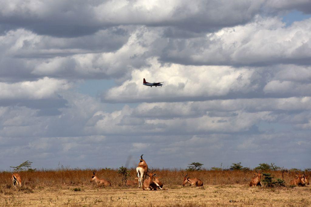 """A plane flies over a herd of antelopes at Kenya's Nairobi National Park in Nairobi, Kenya, March 21, 2015. Kenya's """"long rains"""" season which usually ..."""