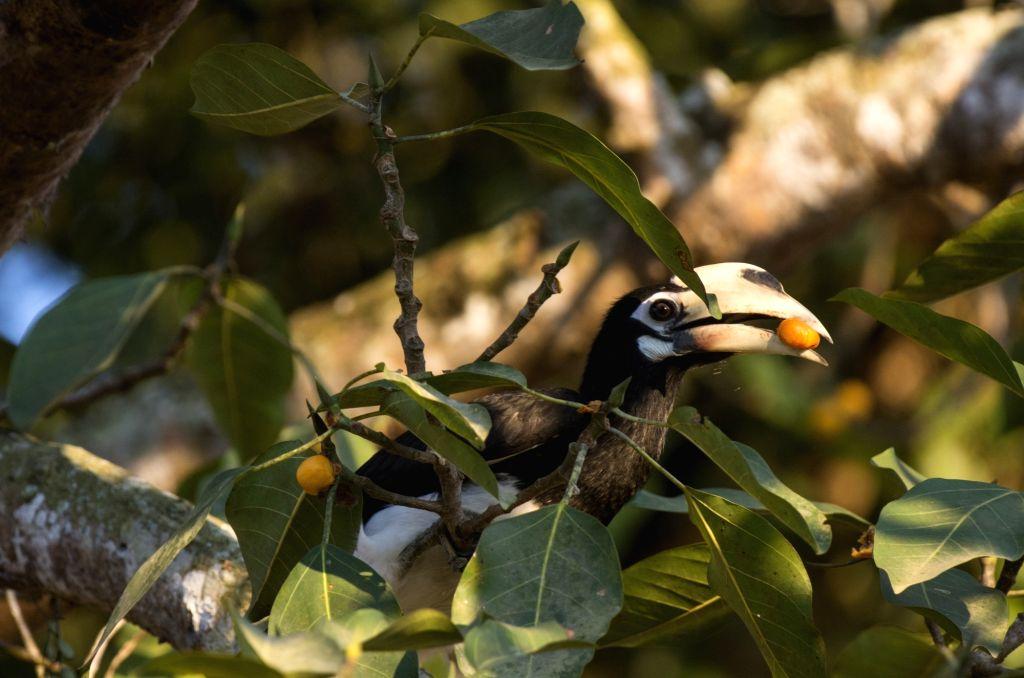 Names of birds given with the image name.(photo:Abir Jain) - Abir Jain