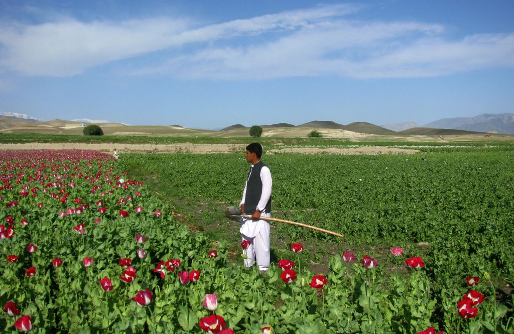 An Afghan farmer works in a poppy field in Nangarhar province of eastern Afghanistan, on April 12, 2014.Photo:
