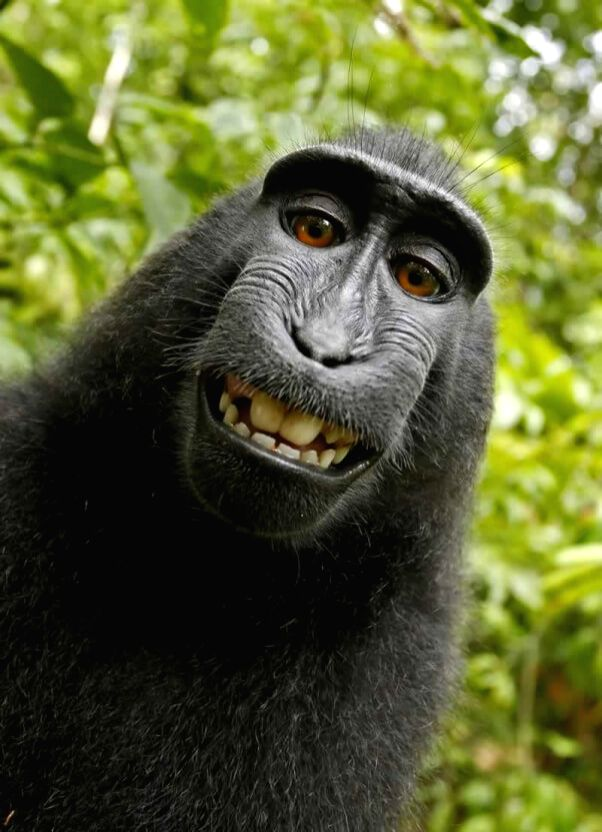 Naruto ? a now-famous monkey known for taking a ?selfie? that prompted an unprecedented copyright lawsuit ? has got another chance at claiming ownership over his image.