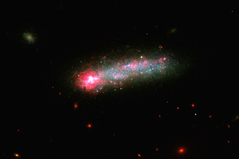 NASA Hubble Space Telescope captures a firestorm of star birth lighting up one end of the diminutive galaxy Kiso 5639. Credit: NASA.