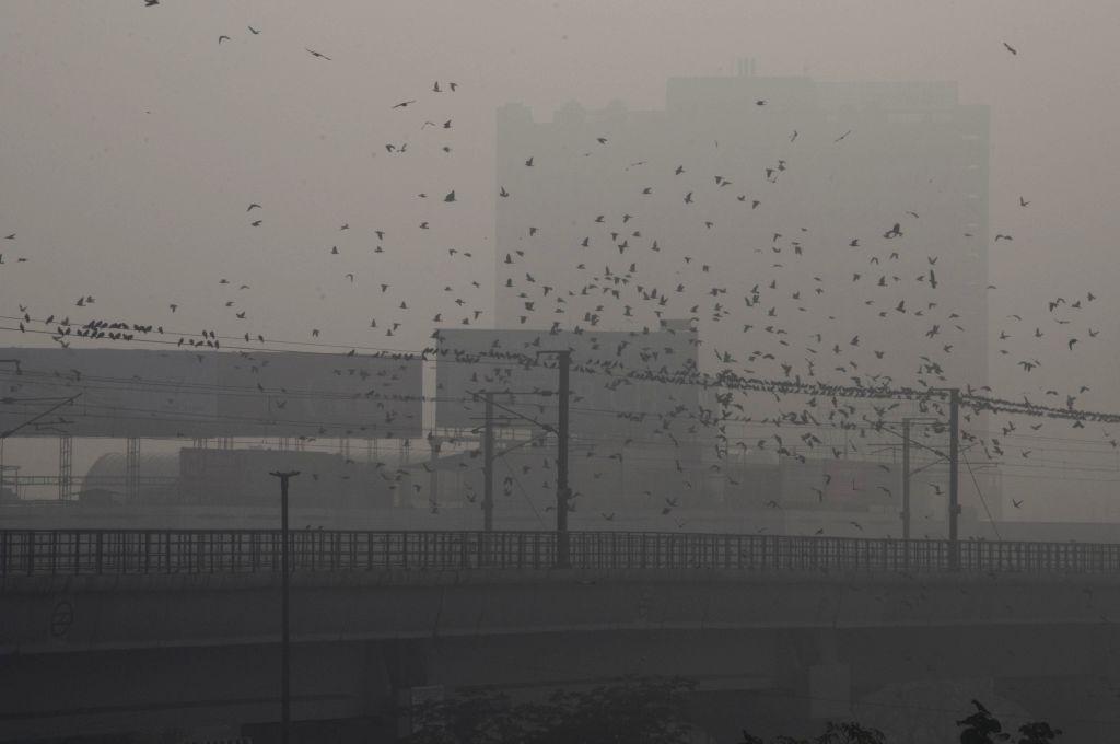 A flock of birds flies in Delhi skies on a foggy morning, on Jan 13, 2015.