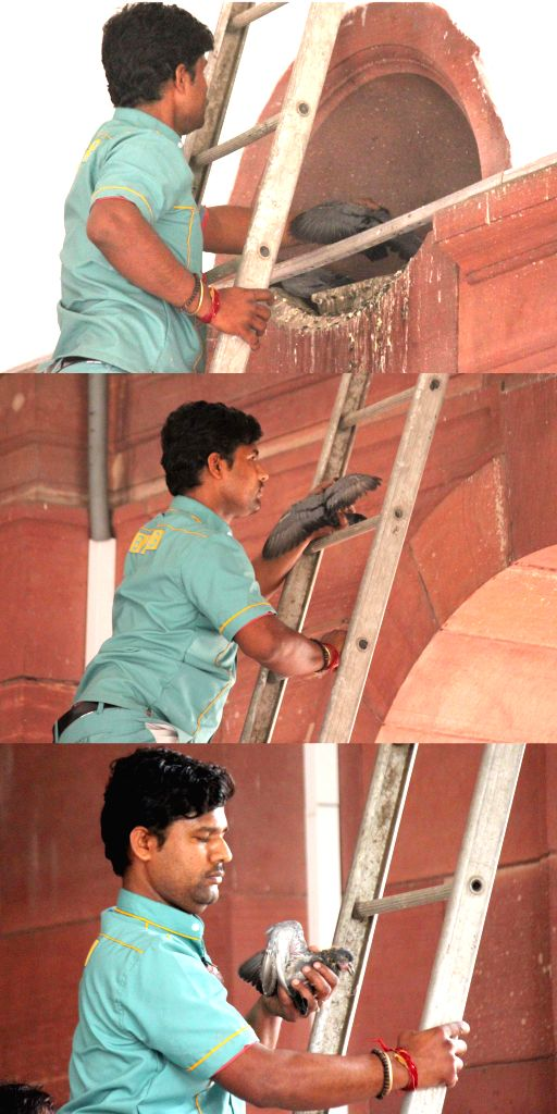 A member of Parliament maintenance staff rescues a pigeon that fell down from one of the arches in the building in New Delhi, on Feb 24, 2015.